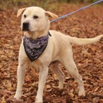 Adoptable Georgia Dogs for December 18, 2015