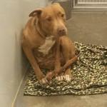 Adoptable Georgia Dogs for December 30, 2015