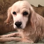 Adoptable Georgia Dogs for December 9, 2015