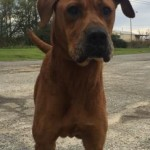 Adoptable Georgia Dogs for January 15, 2016