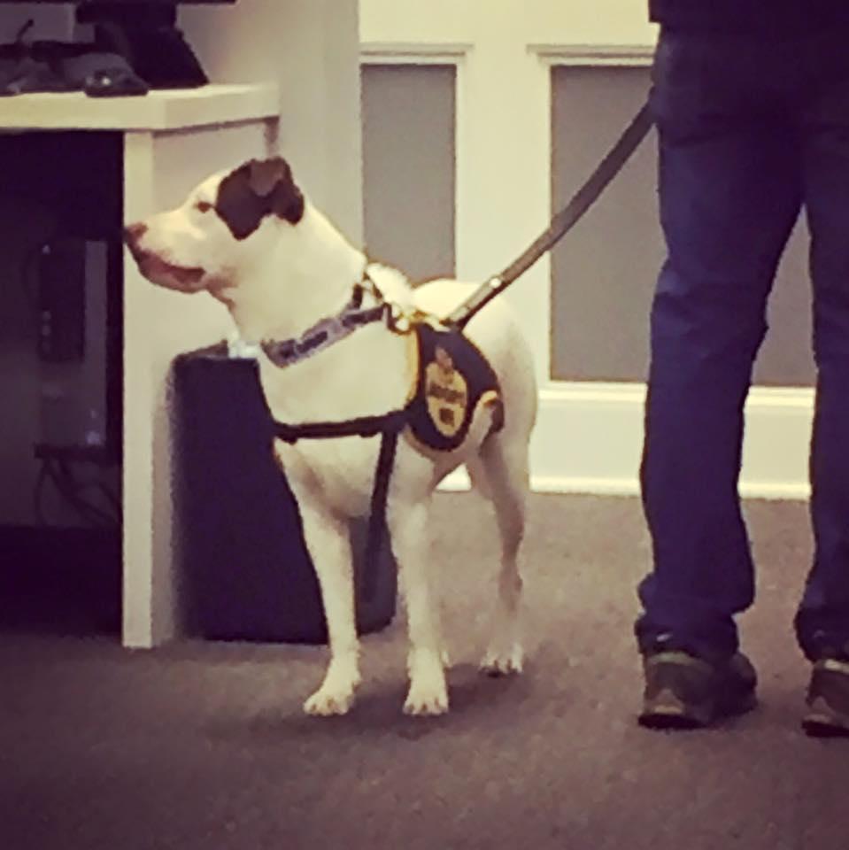 Brookhaven Dog