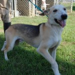 Adoptable Georgia Dogs for January 11, 2016