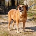 Adoptable Georgia Dogs for January 29, 2016
