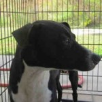 Adoptable Georgia Dogs for February 1, 2016