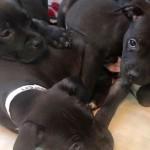 Adoptable Georgia Dogs for February 2, 2015