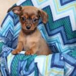 Adoptable Georgia Dogs for February 15, 2016