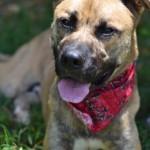 Adoptable Georgia Dogs for February 19, 2016