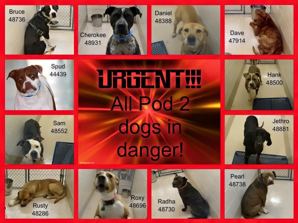 Gwinnett Urgent