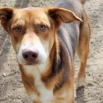 Adoptable Georgia Dogs for February 17, 2016