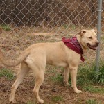 Adoptable Georgia Dogs for March 2, 2016