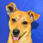 Adoptable Georgia Dogs for March 1, 2016