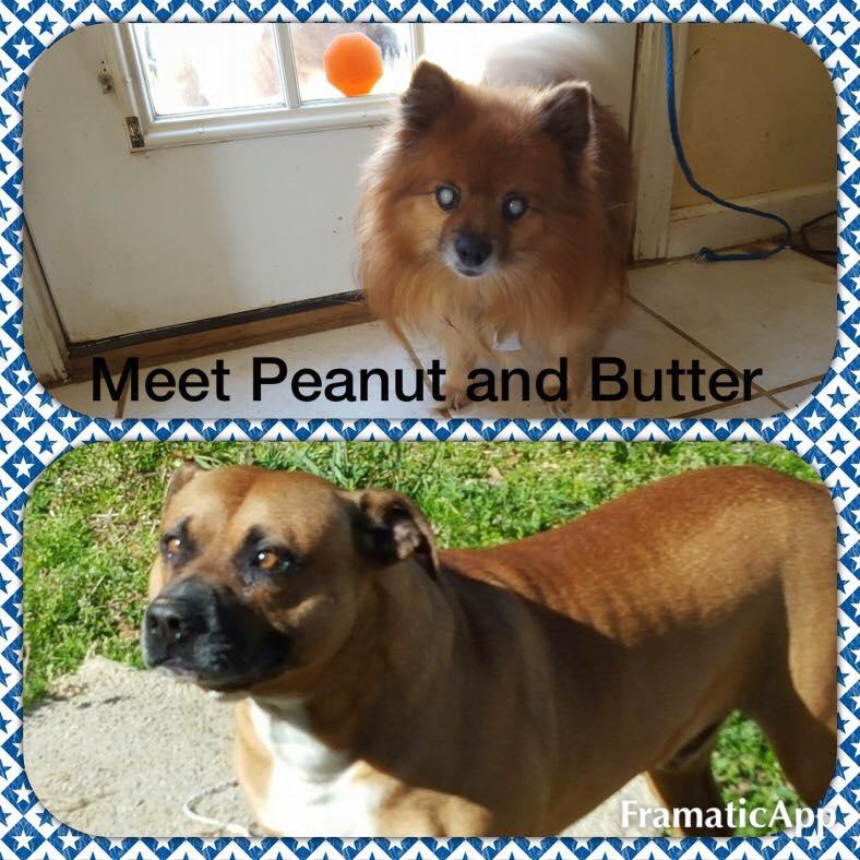 Peanut Butter2