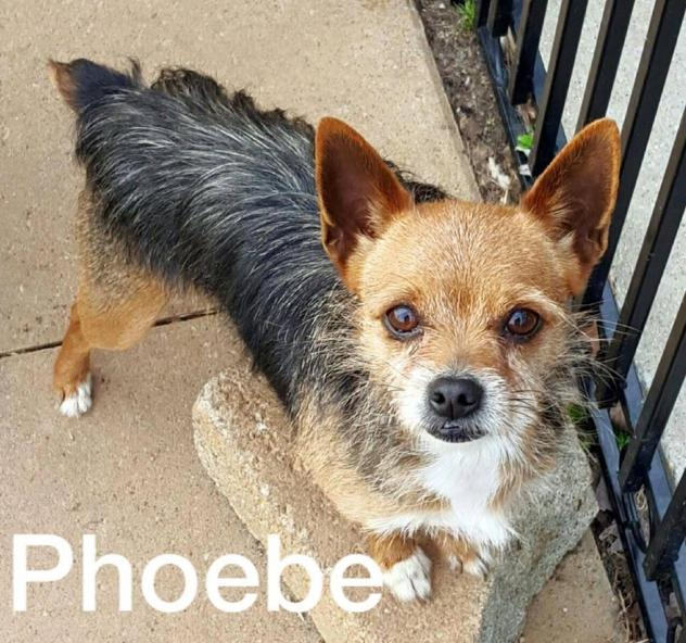 PhoebeHenry