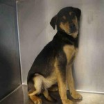 Adoptable Georgia Dogs for March 11, 2016