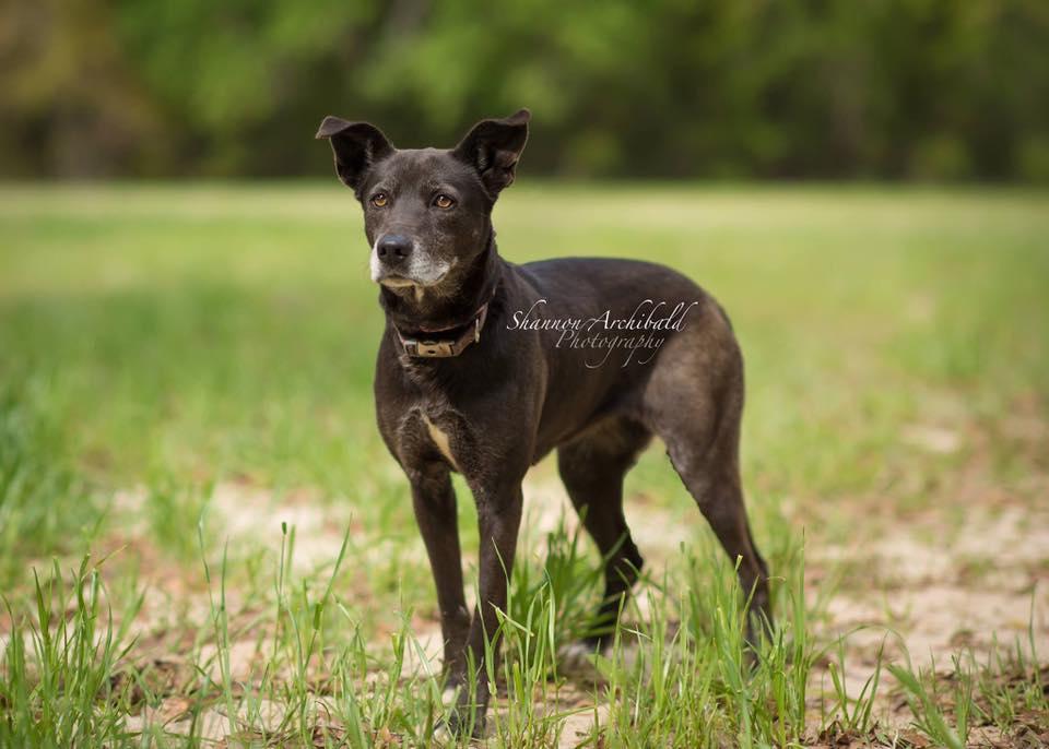 Macon County Dog Rescue