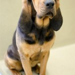 Adoptable Georgia Dogs for April 25, 2016