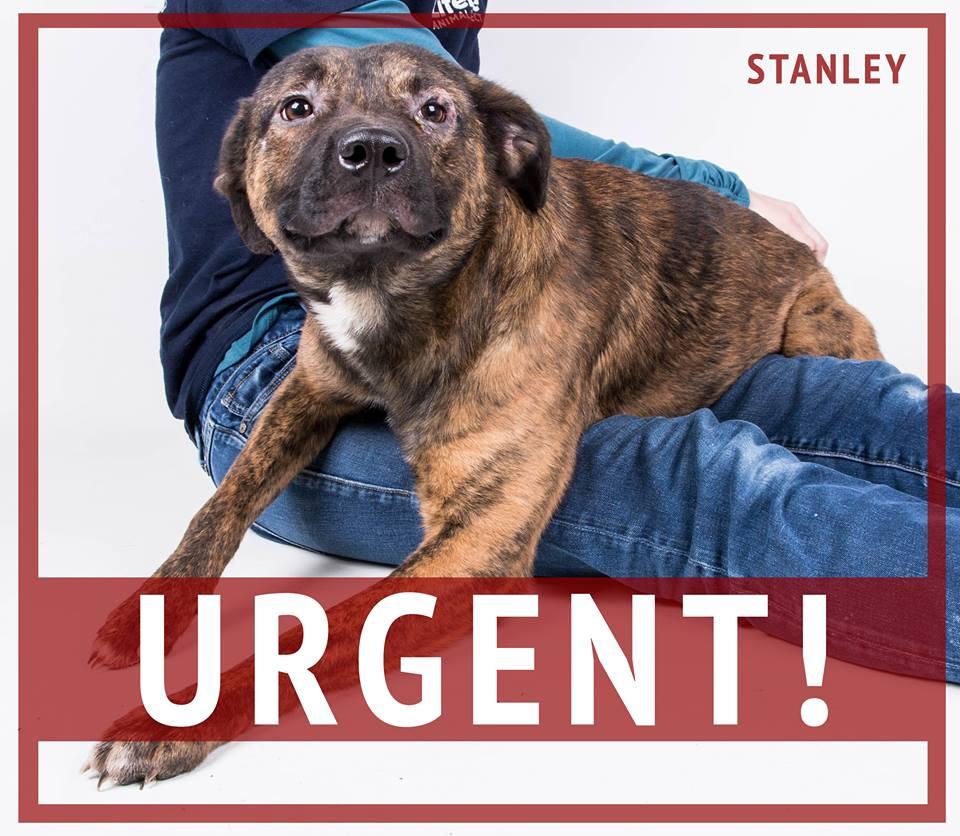 Urgent Stanley