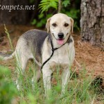 Adoptable Georgia Dogs for May 11, 2016