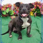 Adoptable Georgia Dogs for May 26, 2016