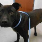 Adoptable Georgia Dogs for May 20, 2016