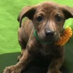 Adoptable Georgia Dogs for May 16, 2016