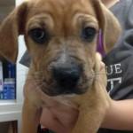 Adoptable Georgia Dogs for May 18, 2016