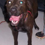 Adoptable Georgia Dogs for June 7, 2016