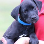 Adoptable Georgia Dogs for June 28, 2016