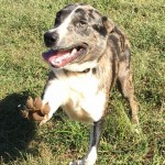 Adoptable Georgia Dogs for June 3, 2016