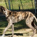 Adoptable Georgia Dogs for June 8, 2016