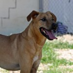 Adoptable Georgia Dogs for June 24, 2016