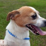 Adoptable Georgia Dogs for June 21, 2016