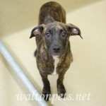 Adoptable Georgia Dogs for June 10, 2016