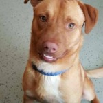 Adoptable (Official) Georgia Dogs for July 18, 2016