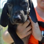 Adoptable (Official) Georgia Dogs for July 21, 2016