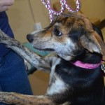 Adoptable (Official) Georgia Dogs for July 13, 2016
