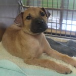 Adoptable (Official) Georgia Dogs for August 12, 2016