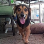 Adoptable (Official) Georgia Dogs for August 9, 2016