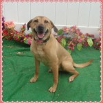 Adoptable (Official) Georgia Dogs for August 8, 2016