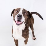 Adoptable (Official) Georgia Dogs for September 23, 2016