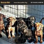 Adoptable (Official) Georgia Dogs for September 28, 2016