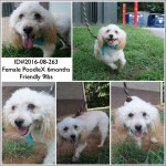 Adoptable (Official) Georgia Dogs for August 30, 2016
