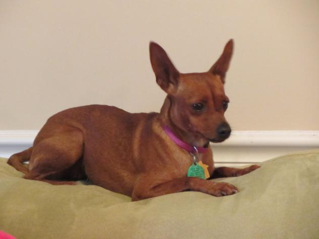 Dog Adoption Athens Al