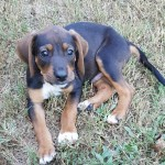 Adoptable (Official) Georgia Dogs for September 20, 2016