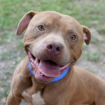 Adoptable (Official) Georgia Dogs for August 24, 2016