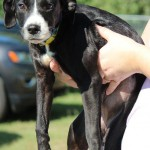Adoptable (Official) Georgia Dogs for October 7, 2016