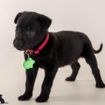 Adoptable (Official) Georgia Dogs for October 11, 2016