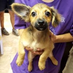 Adoptable (Official) Georgia Dogs for October 4, 2016