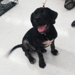 Adoptable (Official) Georgia Dogs for October 10, 2016