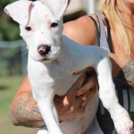 Adoptable (Official) Georgia Dogs for October 6, 2016
